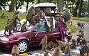 Svet Satova slavi rodjendan!-1266034593-monkeys-ruins-vacationswebsite.jpg