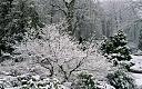 Zima!!!-gardeninwinter1_2418262b.jpg